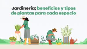jardinería; beneficios y tipos de plantas para cada espacio 02