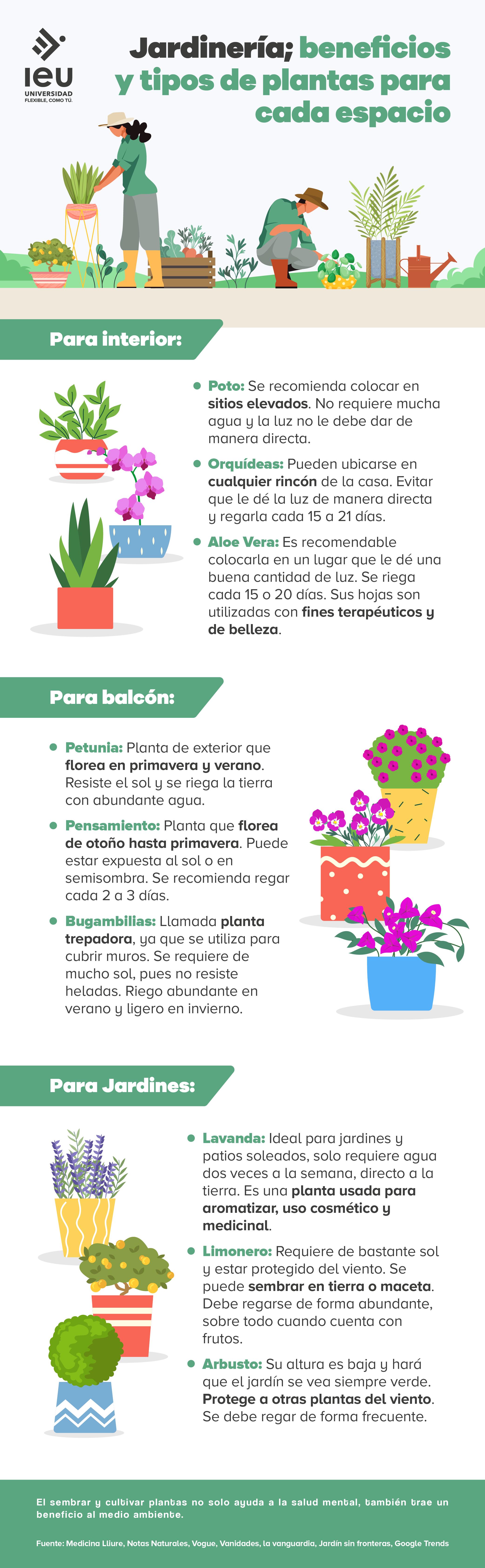 jardinería; beneficios y tipos de plantas para cada espacio infografia